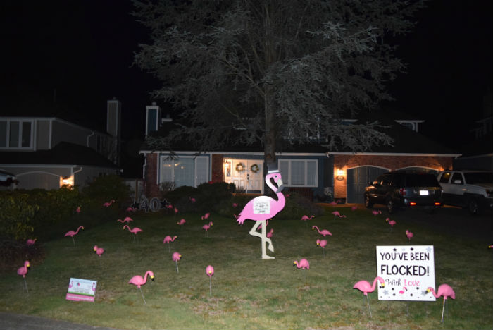 Birthdays are Better with a Yard Announcement! Choose from a Good Old Fashion Flamingo Flocking or Birthday Yard Signs!